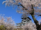 犬山城の桜 2019