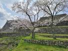 石垣(桜の季節2019)…