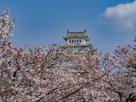 姫路城 さくらの海に泳ぐ鯱