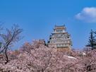 姫路城 さくらに浮かぶ白亜の城