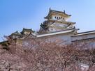 姫路城 出撃前に闘志を秘める