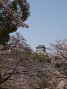 天守と桜其の参…