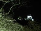 ライトアップ桜と天守…