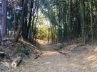 二の丸跡 空堀の散策路