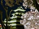 満開の桜と松本城…