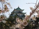 桜と天守其の参…