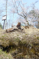 音羽城抜け穴からの桜…