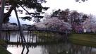 桜と極楽橋