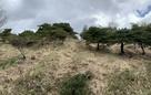 畝状竪堀群(下から)…
