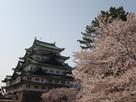 城内から眺める桜と天守…
