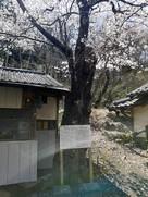 根小屋神社