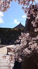 基準木と篠山城…