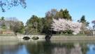 堀に映る眼鏡橋と桜…