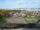 常盤郭の桜