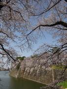春の西之丸の風景…