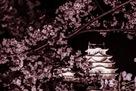 堀の上から桜額を添えて…