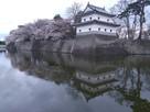 堀に映る二の丸隅櫓と桜…