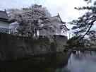 新発田城辰巳櫓と桜…