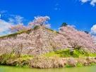 南西隅櫓跡石垣と桜…