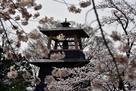 桜の中の鐘楼