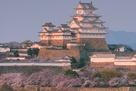 南西からの姫路城と桜の遠景…