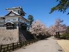 菱櫓と桜並木