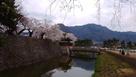 桜の太鼓門