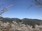 桜海と竹田城(立雲峡から)…