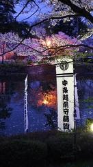 平成最後の桜 1