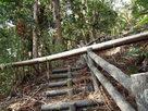 倒木の登城階段…