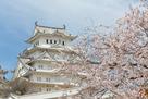 桜に染まる姫路城…