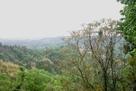 城山神社裏の物見台から…