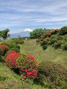 富士山、畝堀そして躑躅…