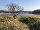 堀と春採湖