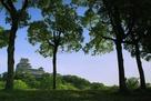 シロトピア記念公園の木々の間から