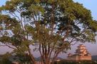 男山配水池公園からの夕景と木…