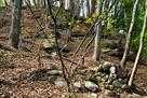 秋葉山出丸の南側斜面の石垣…