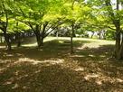 吉原山城 二の丸跡…