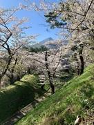 桜に主役を奪われる磐梯山と横堀。…