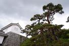 多聞櫓と赤松