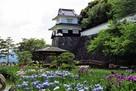 花菖蒲と櫓
