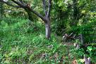 善福寺曲輪の土塁と復元逆茂木…