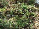 中の丸石垣跡