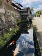 鯉の遊泳池