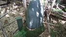 さらに竹藪の奥に‼️…