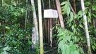 石碑は、竹藪の中だが、撮りやすい場所…