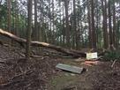 倒木で粉砕された姫丸の壇案内版