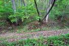 林道が横切る二重竪堀…