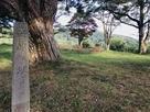 城址碑と本丸
