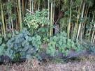 竹藪の中の石碑…